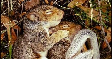 art journey hibernation