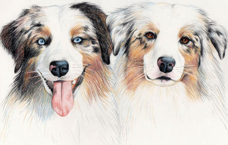 colored pencil drawing of the dogs, with lots of life and personality captured in their eyes, one has his tongue lolling out in a silly grin while the other is a bit more refined and pensive looking