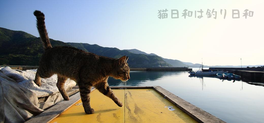 猫日和は釣り日和