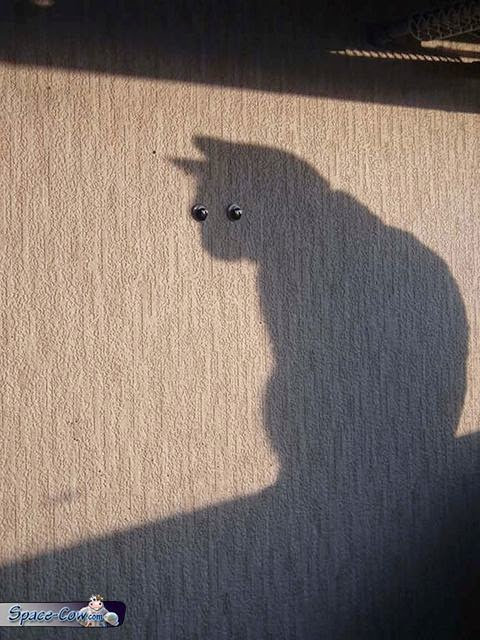 funny cat shadow picture