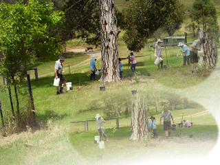 Cassilis Catholic Cemetery, Cassilis, New South Wales ...