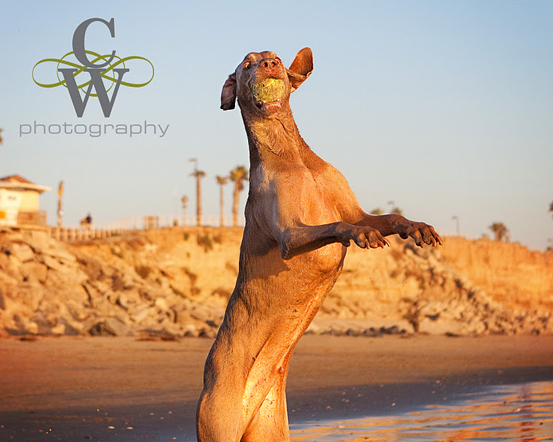 Pet Photography, Huntington beach dog park