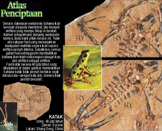 Fosil Katak Umur 40 juta tahun Zaman Eocene Lokasi Shang Dong China