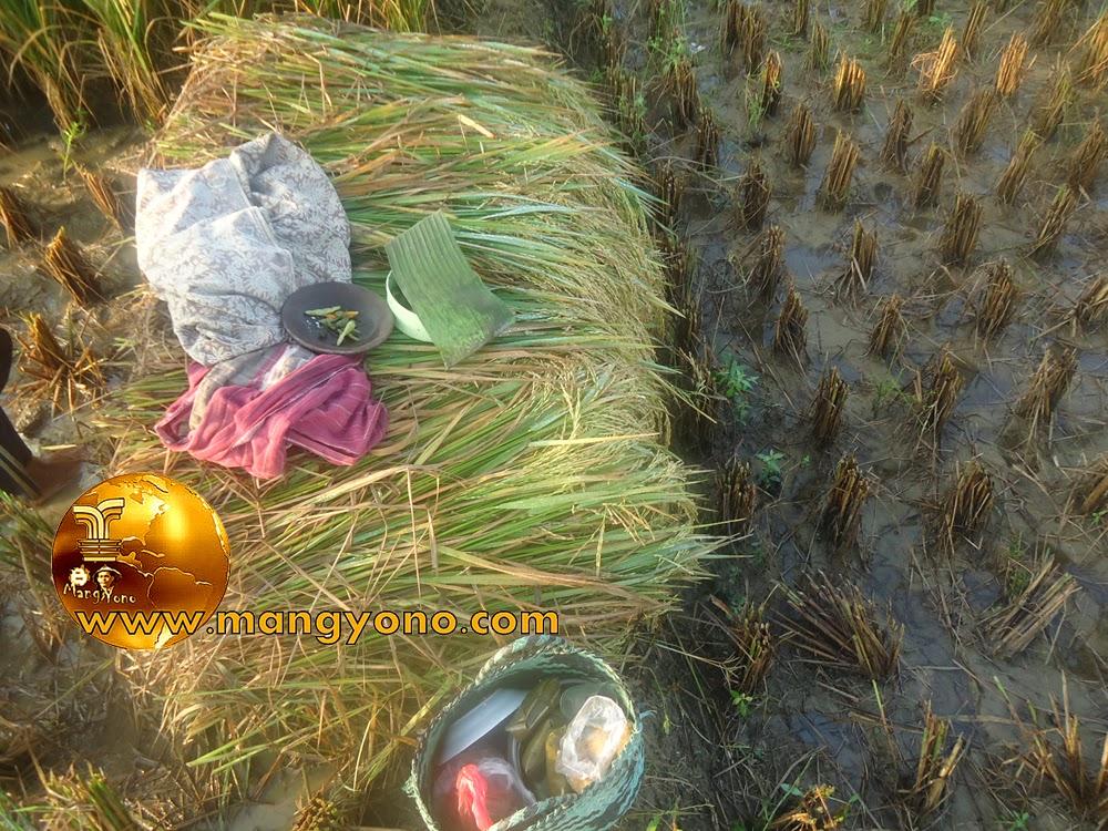 FOTO : Nikmatnya makan di sawah bersama keluarga