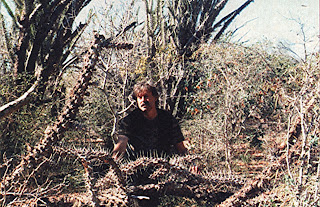 THE MADAGASCAN MAN-EATING TREE - MORE THAN JUST A MONSTROUS MYTH? 25