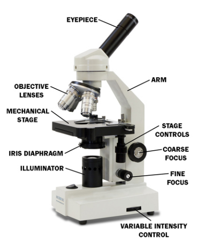 Describing different Parts of Microscope