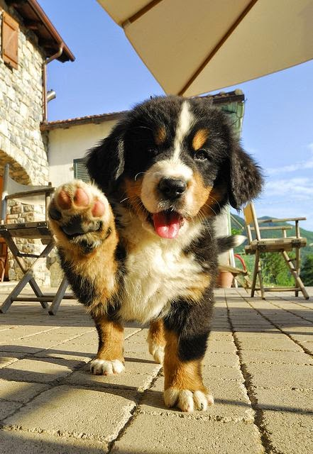 See more Cute puppy nice looking http://cutepuppyanddog.blogspot.com/