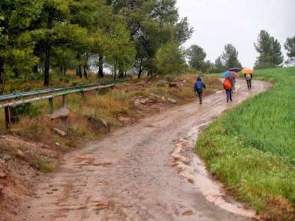 Les canonades de salmorra ens acompanyen en el nostre camí cap a la Sèquia de Manresa