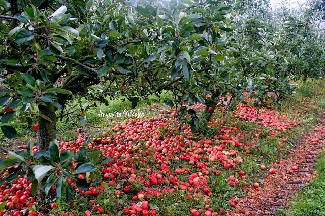 Eddisbury Fruit Farm apple orchard from www.anyonita-nibbles.com