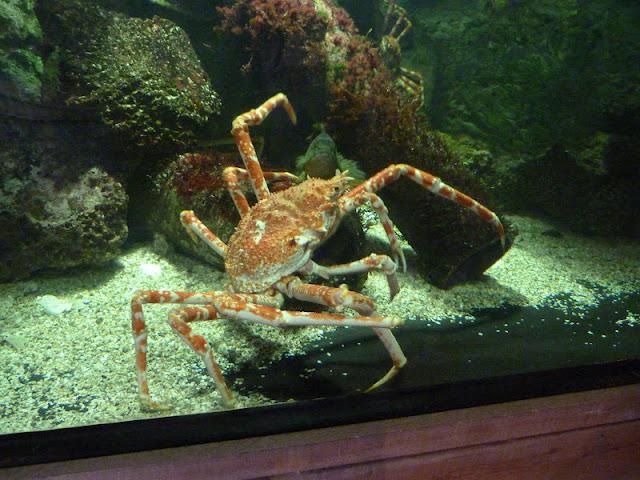 croisic aquarium