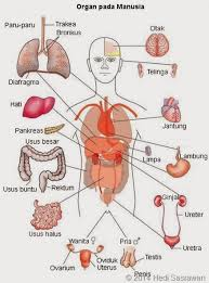 organisasi kehidupan tingkat organ