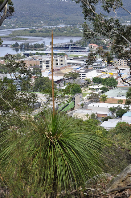 View of Gosford from Flannel Flower Track