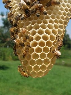 Third Year Beekeeping