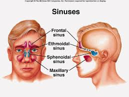 Herbs for Treatment of Sinusitis