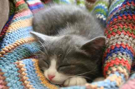 Knitting Pattern Cat Blanket : Cats Eye View @ MPL: Knit One, Purl Two, Harley Three