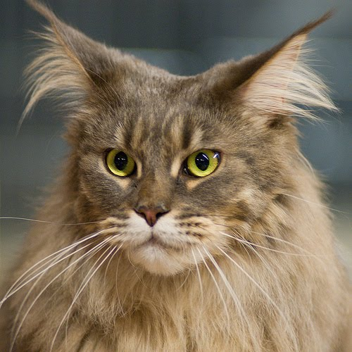 shocked cat gif