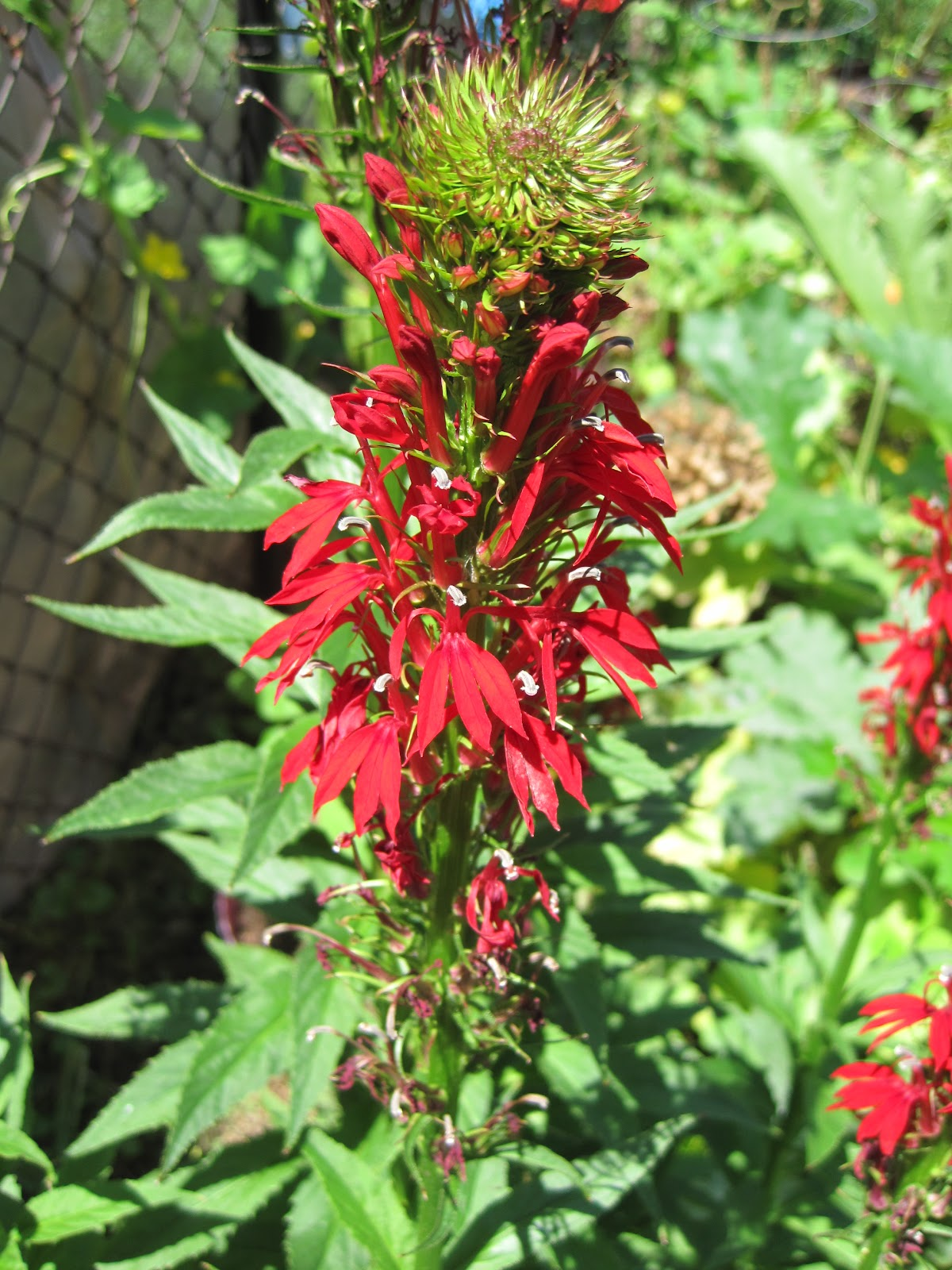 Wild Maryland 101: Maryland Naturalist\'s Notes: Pollination Syndromes