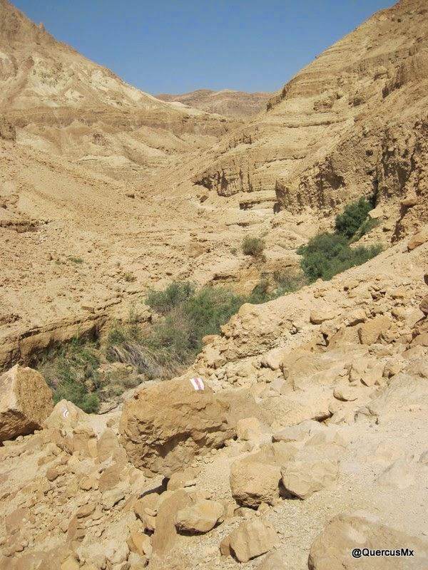 La ruta rojo con blanco va paralela al cauce del río, en Wadi Arugot