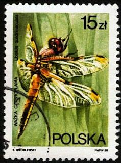 Sello polaco de una libélula de cuatro puntos (Libellula quadrimaculata)