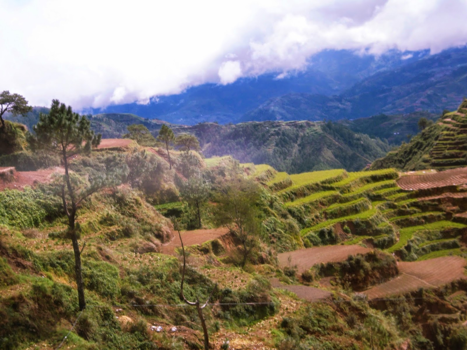 Benguet Rice Terraces