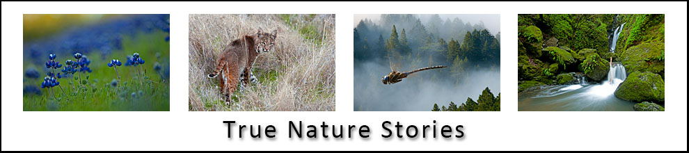 True Nature Stories