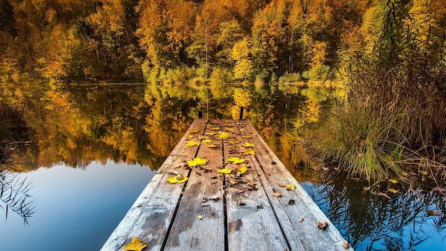 Autumn Wooden Lake