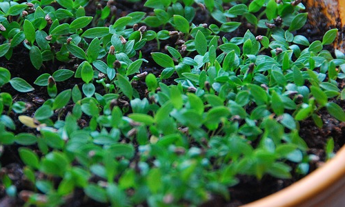 Planting herbs can bring a whole new look to your home and add a variety of healthy, fresh flavors to any dish.