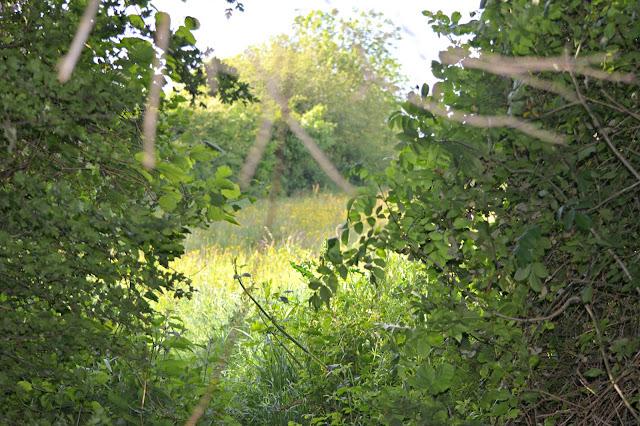 Hidden countryside