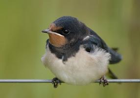 De natuur is het bewonderswaardigst in de kleinste dingen. Plinius de Oudere.