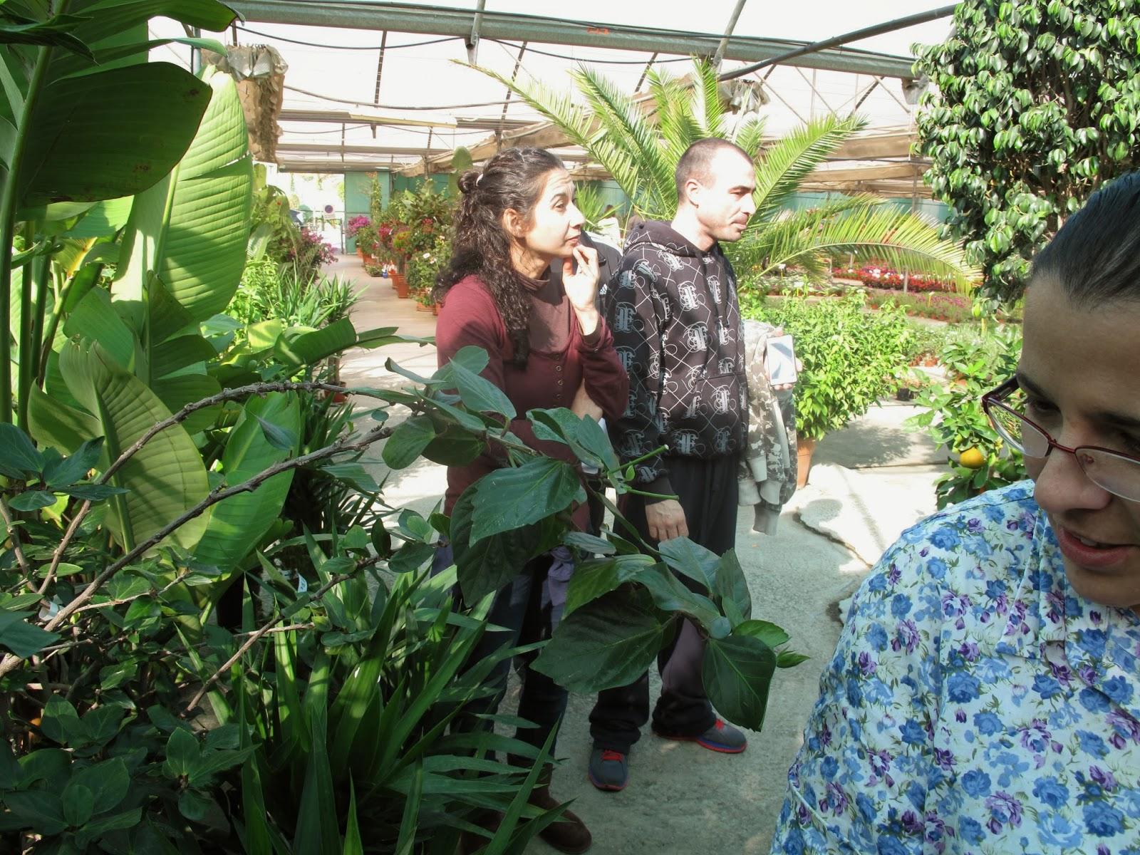 Taller de empleo mijas mejora visitas formativas jardiner a - Oficina virtual de fpe ...