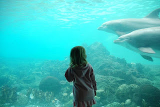Sea World Orlando Florida (Best Honeymoon Destinations In USA) 9