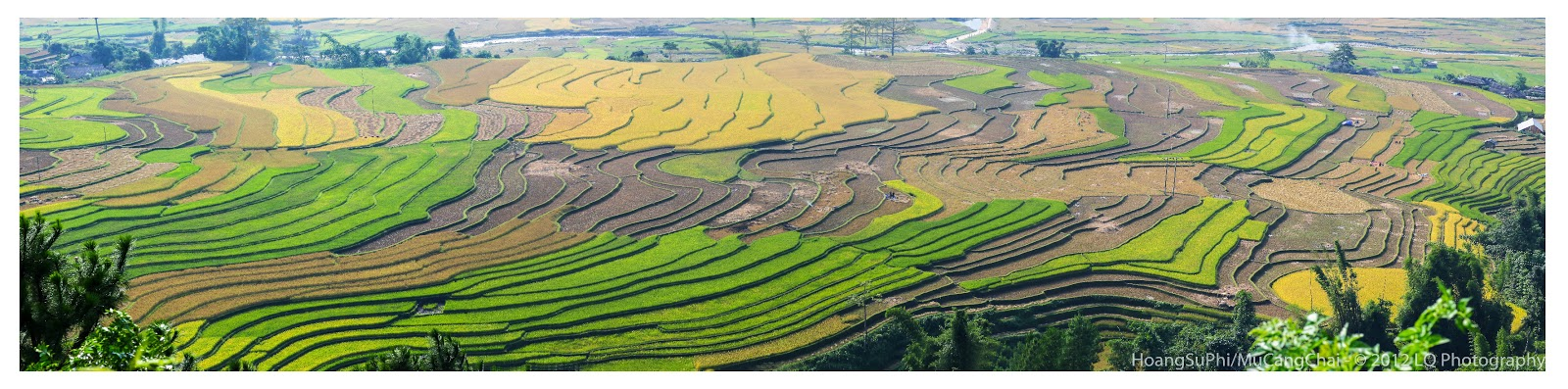 Terraced Fields Hoang Su Phi