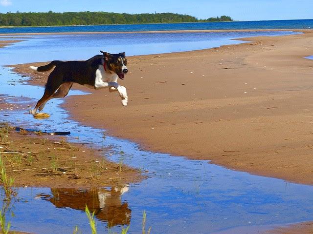 Oh Joy (dog running on beach)