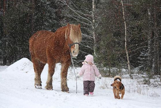 Cara Membuat Efek Salju Pada Foto dengan Photoshop
