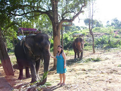 Elephants in Phuket