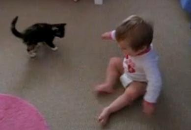 Videos de animales y bebes jugando