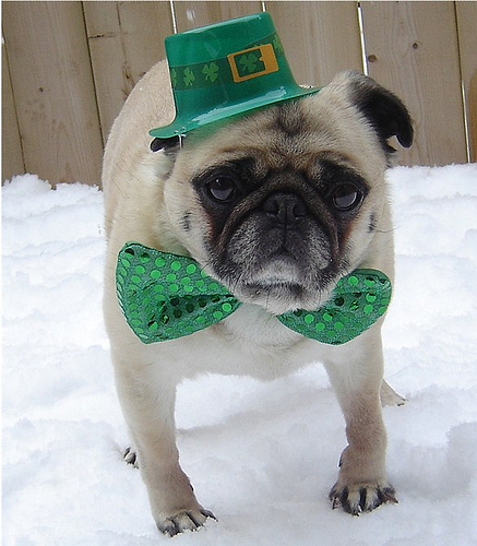 Photos: St. Patrick's Day Dogs