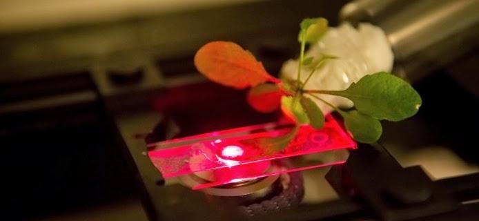 hack tanaman dengan nanotube