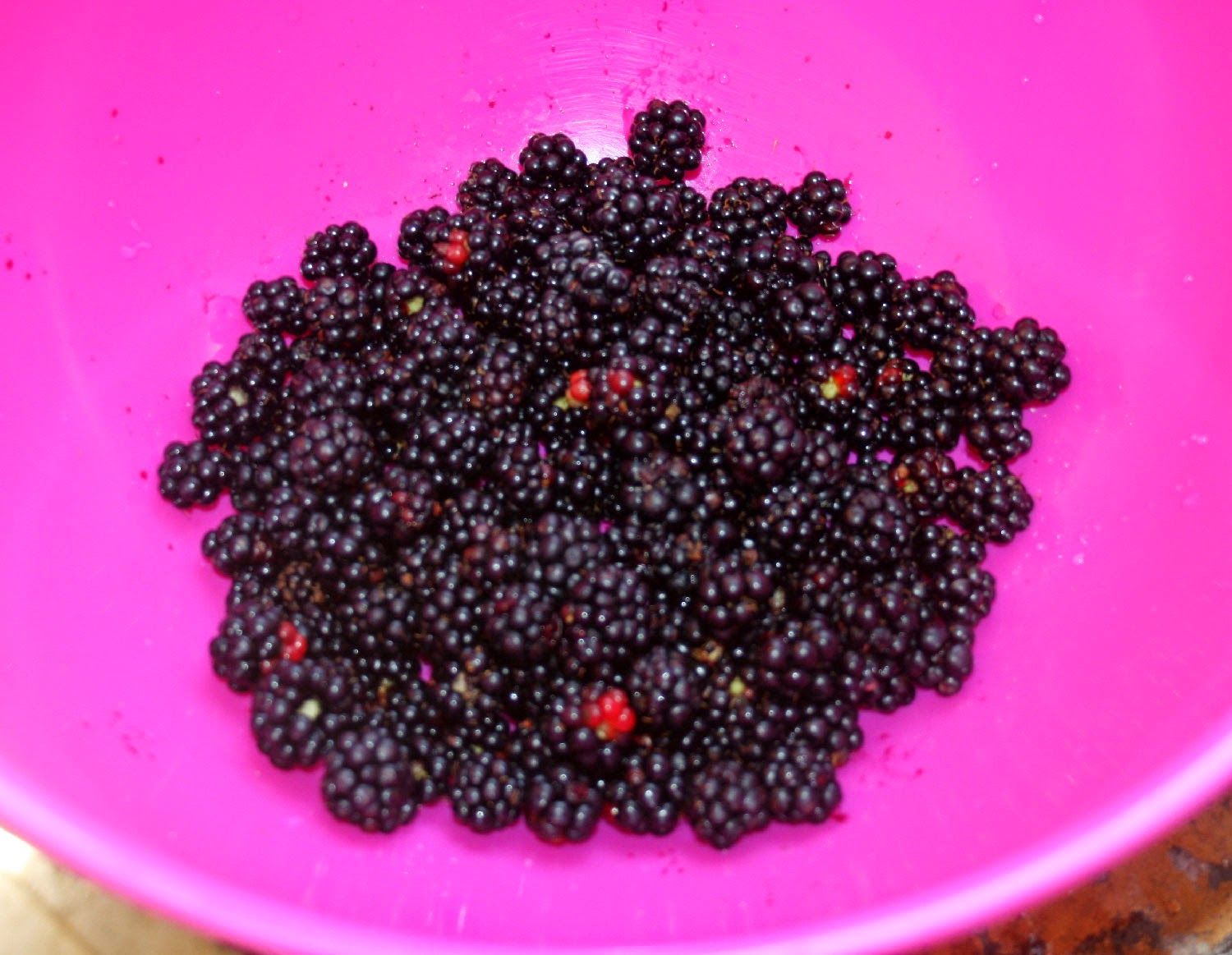 My blackberry harvest for today