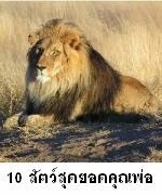 10 อันดับสัตว์สุดยอดคุณพ่อ