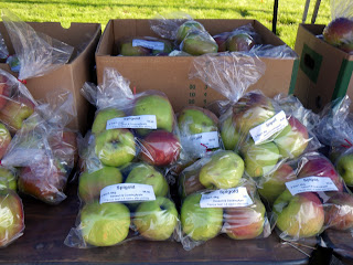 Spigold - the last variety of apples available for sale