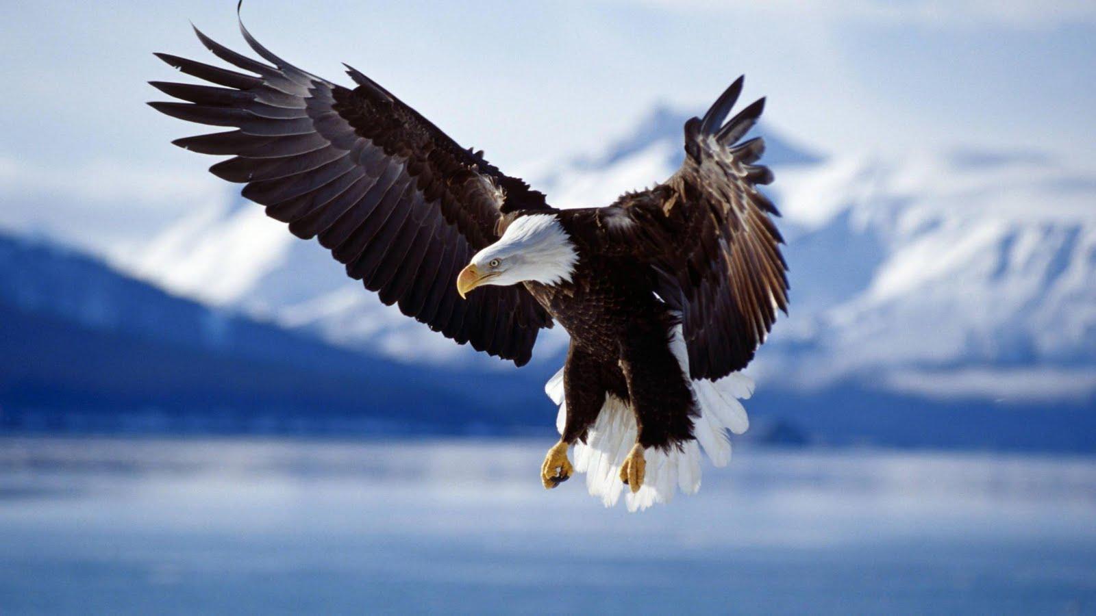 http://4.bp.blogspot.com/-_dkU05xOcPY/TkYYtFbPLfI/AAAAAAAAC_M/cs8rtWEjHFA/s1600/wallpaper_eagle.jpg