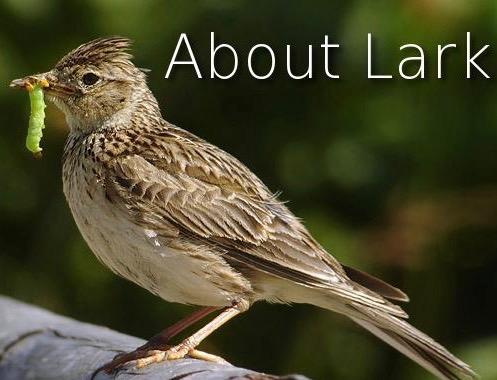 About Lark