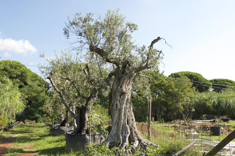 Bartoli garden progettare il giardino come scegliere le - Piante alto fusto da giardino ...