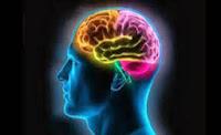 Makanan Untuk Mencerdaskan Otak