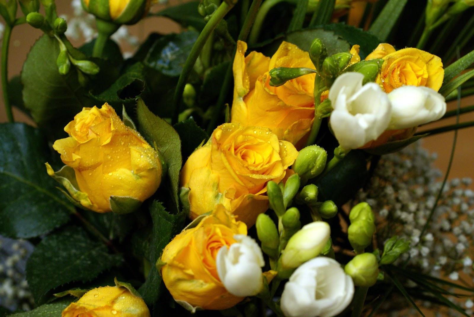 Violetas el lenguaje de las rosas - Significado rosas amarillas ...