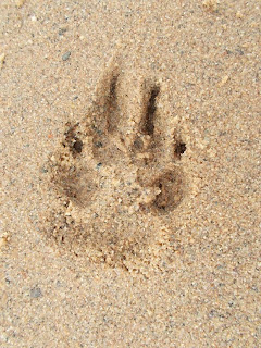 huella de pata de perro en la arena