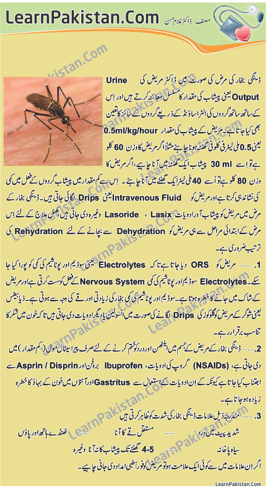 an essay on dengue in urdu