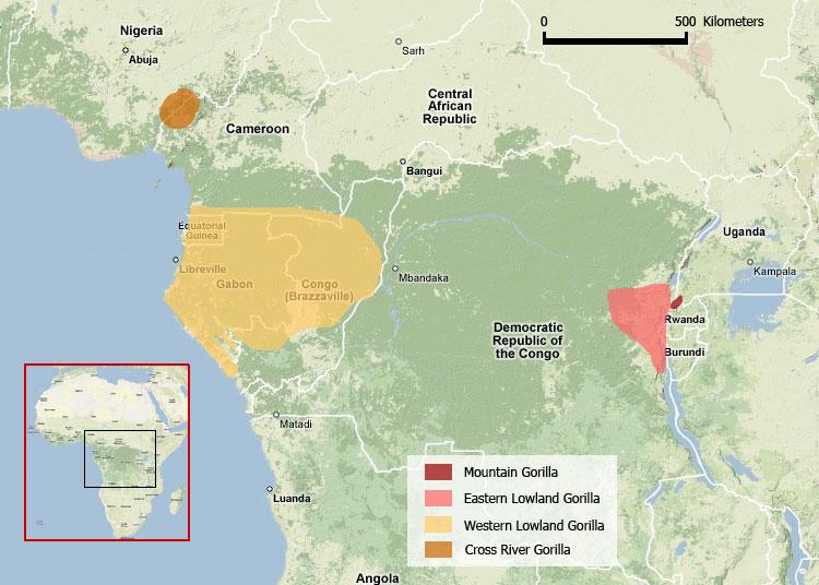Cross river gorilla habitat map