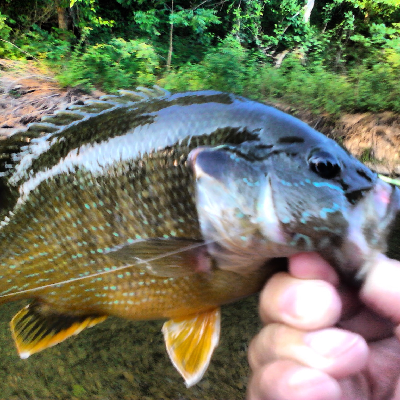 Buggin 39 out february 2013 for Bluegill fly fishing